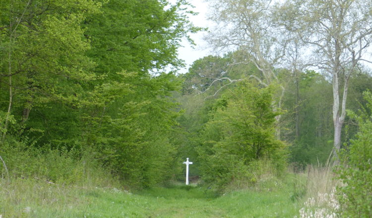 Prolongation : Les forêts de l'Oise sont toujours interdites au public