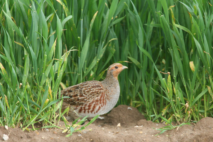 Étude Méthanisation et petite faune de plaine