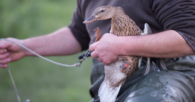 Sanitaire : l'Influenza Aviaire